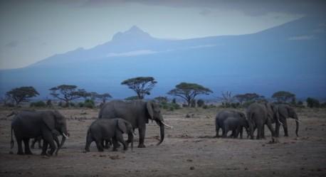 Parco-Nazionale-Amboseli-700x468