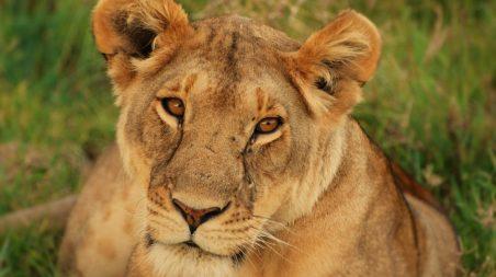 Riserva-Nazionale-Masai-Mara-1